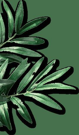 leaf_left