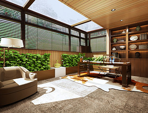 新装修的房子放什么植物好
