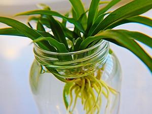 环保家装:巧用绿色植物清新装修后空气