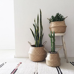 居家必备装饰植物,5大网红界的大咖植物一览