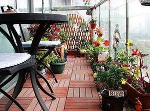 健康家居:室内植物选购技巧