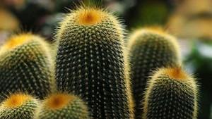 室内放哪些植物净化空气效果好?不适宜摆放哪些植物?