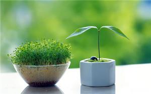 卧室养花草有讲究:卧室里不适合养什么花草?