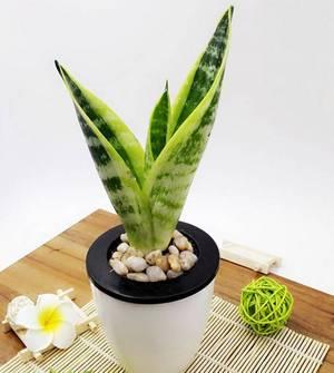 新家装修,如何选择有效的吸毒植物