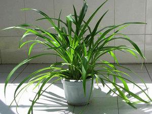 适合放在卧室的绿色植物有哪些