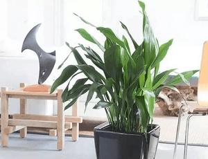 装修后室内最适合放置的12种植物