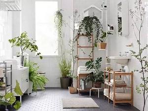 装修后室内如何搭配绿植