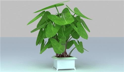 家居植物有什么作用?(图二)